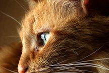 Kittens/cats