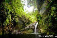 Tropical Vacation anyone?