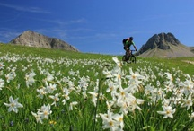 Montenegro / A collection of pins from Saddle Skedaddle's cycling holidays in Montenegro