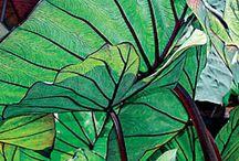 feuilles herbes