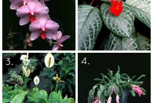 Plants / by Carla Salard
