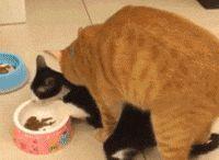 お互いに食い意地がはってる?