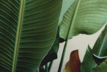 LUSH // LANDSCAPES / JUNGLE, GREENERY, PLANTS