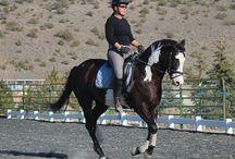 Horse training exercises