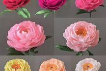 Flower /kwiaty