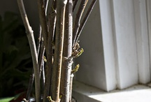 Vår/spring