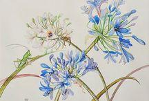 dessins fleurs et planches botaniques