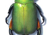 Bugs Illustraciencia