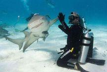 Shark Week Obsession / by Jodi Kay Hansen