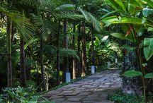 Patio-Walkway