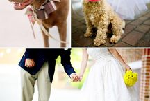Boda con mascotas / Que tu mejor amigo sea parte de tu gran día. #Amor #Wedding #Boda #Idea #Love #dog #perrhijo #petlove