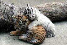 Cute Animals / by Queen Meen