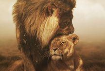 Leo Zodiac / Leo zodiac