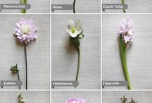 Flower Dictionary / by A Modern Proposal - Edmonton Wedding Planner