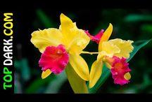 20 Flores De Orquídeas Más Hermosas Del Mundo