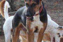"""dogs to adopt, honden ter adoptie AID """" animals in Distress, Spanje """" / adoptiehonden Animals in Distress Malaga, Spanje"""