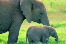 Elephants for Amara