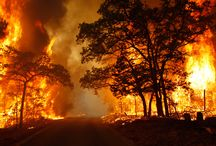 Fire / Forest fires, natural disasters causing  fire they are all horrific.