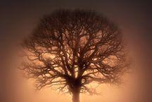 trees / by Niki Ruetz