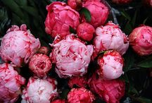 Flowers :) / by Anushree Agarwal