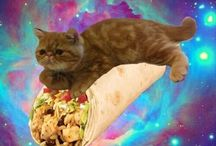 Cats on burritos