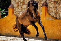 Cavalli Senza Freni