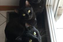 Animals | Kitties