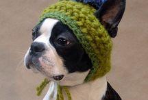 Dog hats and scarfs / by Robin Girouard