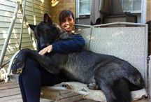 BIG dogs!