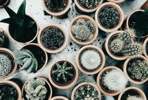 Decorate, plants