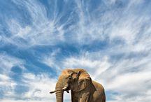 Elephants. My love.