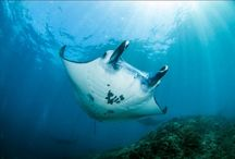 Nusa Penida sets example for marine management