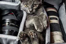 Kedi köpek / Cats & Dogs / cats and dogs and other animals / pets