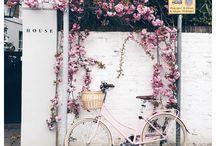 flower 景色