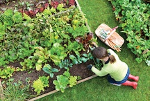 Gardening Tips / Tips To Help You Create A Successful Garden / by Guiding Instincts