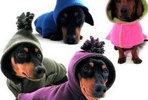Cão / Cão de roupa