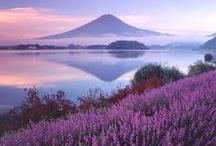Japan / by Bonnie Koenig