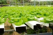 Indoor Gardens Niagara / Indoor Gardens Niagara offers Hydroponic Equipment, Organic Nutrients, Electrical Equipment, Climate Controllers etc. in St. Catharines.