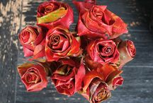 rose flowers leaves / by Trena Infinger