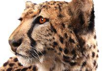 Opgezette dieren taxidermy / www.wonderfulnature.nl