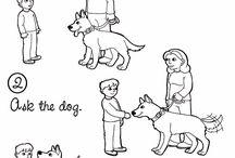 dog safety