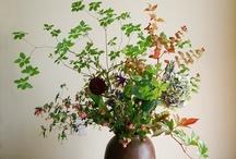 Hage og blomster
