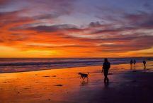 Bald Head Island - USA Today Dog Pick / Best dog friendly beach