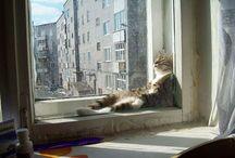 cats / cica