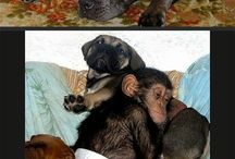 Pups and chimp eating+chimp wearing diaper+chimp and mom holding hands=amazingly awesome, picture / Kinda.........cute.