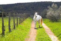 Horses / by Antoinette Hjelte