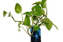 GREEN DESIGN / Photo by: Federico Poletti  #design  #green #free #nature