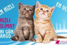 Kedi Maması-Kampanyalı Mamalar / Birçok kedi maması markası ve aradığınız kedi mamaları ile ilgili kampanyalar..