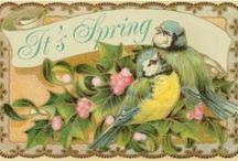 Spring / by Christina Oberdecker
