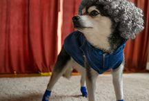 "Kodiak's Fun Stuff / Fun stuff ""paw""-picked by Kodiak himself for your enjoyment."